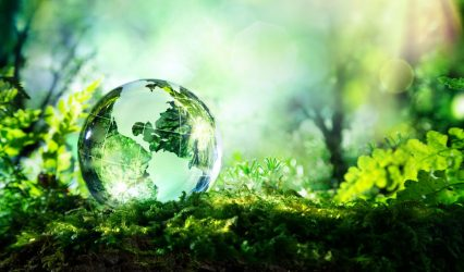 Sustainability – How is This Addressed by SCOTT GROUP STUDIO?